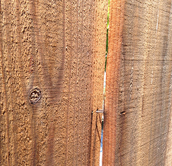 Fence board with staple coming out